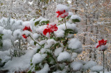 20141101_084441 First Snow