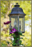 Clematis on Lamp Post