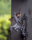 Carolina Wren with Nesting Material