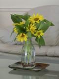 P7160123 Volunteer Sunflowers