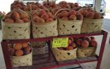 Fancy Lady Peaches