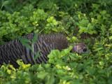 P1090749 Teenage Turkey?