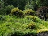 Garden Run Amok