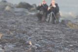 Izabeltapuit met vogelaars /  Isabelline Wheatear with birders, oktober 2013