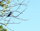 Fauna of the Pantanal