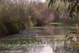 River Yarkon