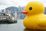 Big Duck vs Small Ferry