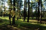 2016 August AZ White Mountains Camping