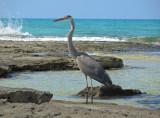 Eleuthera, Bahamas, Duck Inn, Jan 29th - Feb 19th 2014
