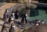 Greeters at the Penguin Exhibit