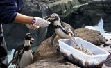 Feeding Penguins