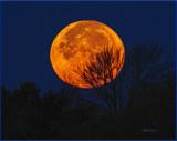 Super Duper Moon 2016