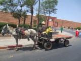 Marrakech Essaouira 2013 030.JPG