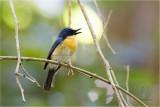Birds of Palawan Island