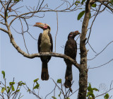 Birds of Caylabne Bay/ Mt. Palay-Palay