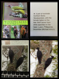 Northern Sooty Woodpeckers Published