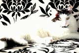 Cats & Dogs and other amazing animals