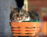 Longaberger Cat