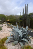 Curacao Jul14 0493.jpg