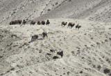 Caravan descending a dusty hill, Wakhan Corridor, Afghanistan