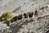 Camel caravan, Wakhan Corridor, Afghanistan