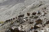 We came across this caravan an hour drive southwest of Khargoush, Tajikistan