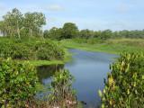 Suriname Nov15 0767.jpg