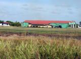 Suriname Nov15 0773.jpg