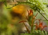 Indian Paintbrush Ferns & Bug