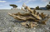 Mt. Washington Wood Sculptures