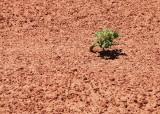 Plant life on Mars!