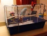 Motel bird