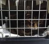 Binky in the kennel