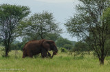 Africa-003.jpg