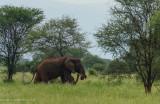 Africa-004.jpg
