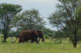 Africa-005.jpg