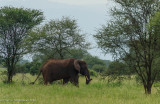 Africa-007.jpg