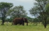 Africa-008.jpg