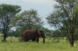 Africa-009.jpg