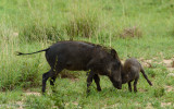 Africa-011.jpg