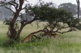Africa-018.jpg