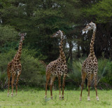 Africa-019.jpg