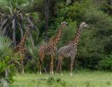 Africa-020.jpg