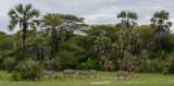 Africa-021.jpg