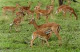 Africa-022.jpg