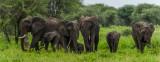 Africa-028.jpg