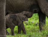Africa-029.jpg