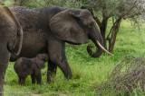 Africa-031.jpg