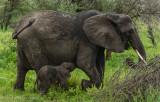 Africa-032.jpg