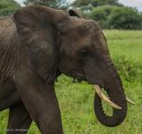 Africa-035.jpg